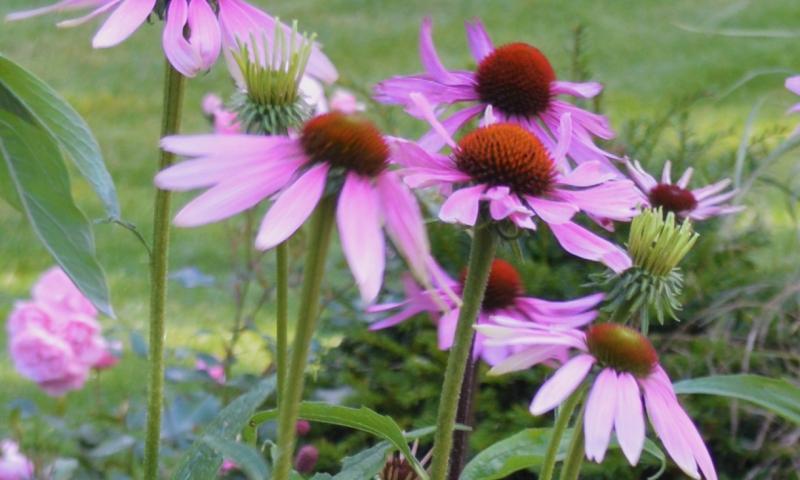 Garden design sheffield for Garden design quiz